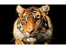 Fotobehang Vlies | Wilde Dieren | Bruin | 368x254cm (bxh)