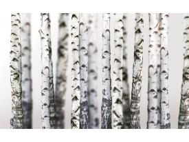 Fotobehang Bomen | Grijs, Wit | 152,5x104cm