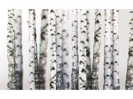 Fotobehang Vlies | Bomen | Grijs, Wit | 368x254cm (bxh)