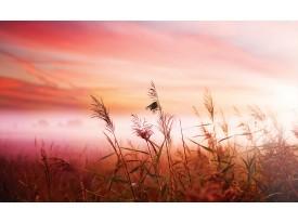 Fotobehang Natuur | Roze | 312x219cm