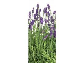 Deursticker Muursticker Lavendel | Paars, Groen | 91x211cm