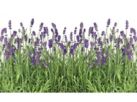 Fotobehang Vlies   Natuur, Lavendel   Groen   368x254cm (bxh)