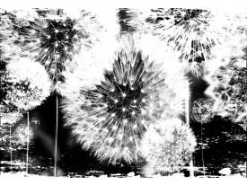 Fotobehang Paardenbloem | Zwart, Wit | 416x254