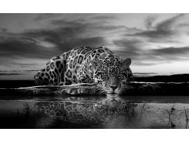 Fotobehang Jaguar, Dieren | Zwart | 152,5x104cm