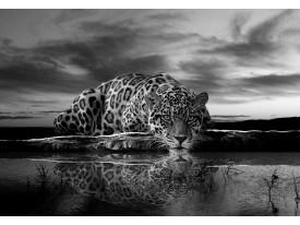 Fotobehang Vlies | Jaguar, Dieren | Zwart | 368x254cm (bxh)
