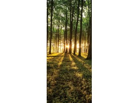Deursticker Muursticker Bos, Natuur | Groen | 91x211cm