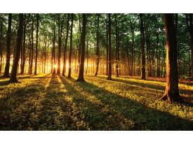 Fotobehang Bos, Natuur | Groen, Geel | 312x219cm