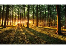 Fotobehang Vlies | Bos, Natuur | Groen, Geel | 368x254cm (bxh)