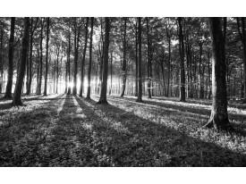 Fotobehang Bos, Natuur | Zwart, Grijs | 152,5x104cm