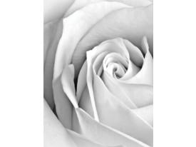 Fotobehang Papier Roos, Bloem | Grijs | 184x254cm