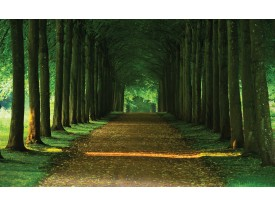 Fotobehang Bos, Natuur | Groen | 312x219cm