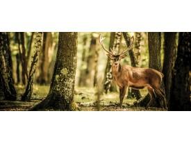 Fotobehang Bos, Hert | Bruin | 250x104cm