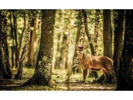 Fotobehang Bos, Hert | Bruin | 312x219cm