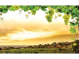 Fotobehang Natuur | Geel, Groen | 208x146cm