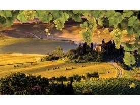 Fotobehang Natuur | Geel, Groen | 312x219cm