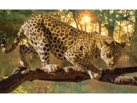 Fotobehang Jaguar, Dieren | Geel | 416x254