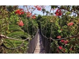 Fotobehang Vlies | Bloemen, Natuur | Groen | 368x254cm (bxh)