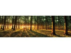 Fotobehang Vlies Bos | Groen, Geel | GROOT 832x254cm