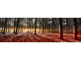 Fotobehang Vlies Bos | Groen, Geel | GROOT 624x219cm