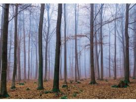Fotobehang Vlies | Bos, Natuur | Bruin | 368x254cm (bxh)