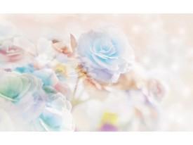 Fotobehang Vlies   Roos, Bloemen   Blauw   368x254cm (bxh)