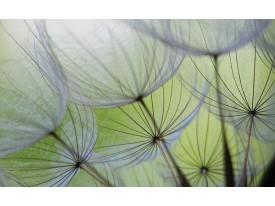 Fotobehang Bloemen | Groen, Grijs | 312x219cm