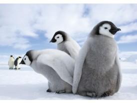 Fotobehang Pinguïn, Dieren | Grijs | 416x254