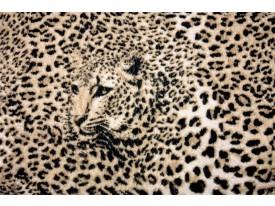 Fotobehang Vlies | Luipaard, Dieren | Bruin | 368x254cm (bxh)