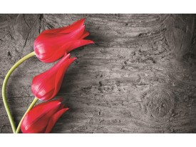 Fotobehang Papier Bloemen, Tulp | Rood | 254x184cm