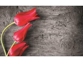 Fotobehang Bloemen, Tulp   Rood   312x219cm