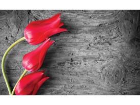 Fotobehang Vlies | Bloemen, Tulp | Rood | 368x254cm (bxh)