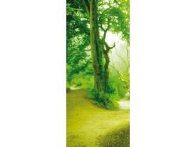 Fotobehang Boom | Groen | 91x211cm