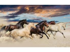 Fotobehang Papier Paarden | Crème, Blauw | 254x184cm