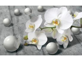 Fotobehang Vlies   Bloem, Orchidee   Grijs   368x254cm (bxh)