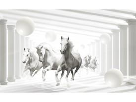 Fotobehang Vlies | Paarden, Modern | Wit | 368x254cm (bxh)