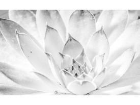 Fotobehang Bloem, Modern | Wit | 208x146cm