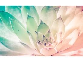 Fotobehang Bloem, Modern | Turquoise | 416x254