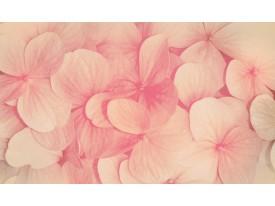 Fotobehang Bloemen | Roze, Crème | 104x70,5cm