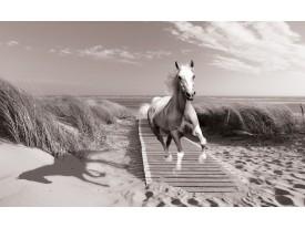 Fotobehang Paard, Strand | Grijs | 312x219cm