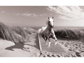 Fotobehang Vlies | Paard, Strand | Grijs | 368x254cm (bxh)