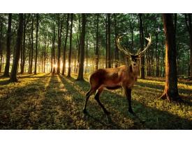 Fotobehang Vlies | Bos, Hert | Bruin | 368x254cm (bxh)