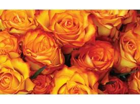 Fotobehang Vlies | Rozen, Bloemen | Oranje | 368x254cm (bxh)