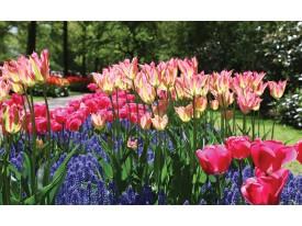 Fotobehang Papier Tulpen, Bloemen | Groen | 254x184cm