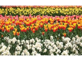 Fotobehang Papier Tulpen, Bloemen | Oranje | 368x254cm