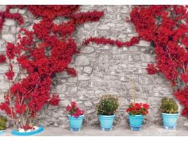 Fotobehang Vlies | Muur, Bloemen | Rood | 368x254cm (bxh)