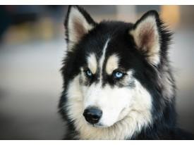Fotobehang Vlies | Hond | Grijs, Zwart | 368x254cm (bxh)