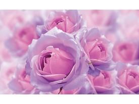 Fotobehang Vlies | Rozen | Roze, Paars | 368x254cm (bxh)