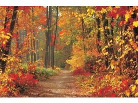 Fotobehang Papier Bos, Herfst | Oranje | 368x254cm
