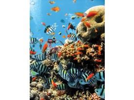 Fotobehang Papier Natuur | Blauw | 184x254cm