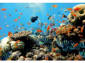 Fotobehang Natuur, Vissen | Blauw | 208x146cm